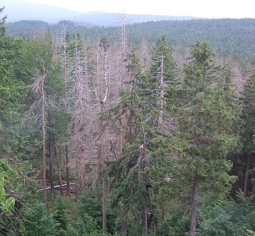 Naturwaldreservat auf dem Stückberg 2007