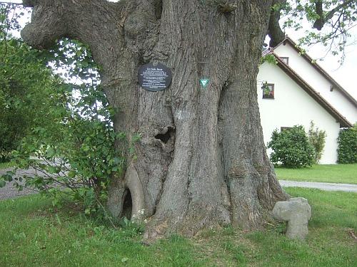 kalterbaum_a.jpg