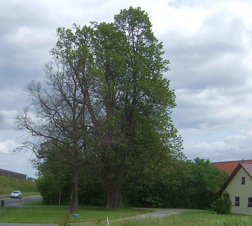 kalterbaum_b.jpg