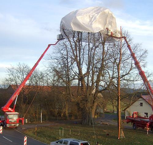 Kalter Baum am 18.11.2009 - der Sagenbaum der Oberpfalz wird eingehüllt