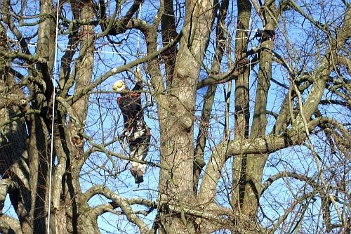 Kalter Baum am 19.11.2009 - Ummantelung schwieriger als gedacht