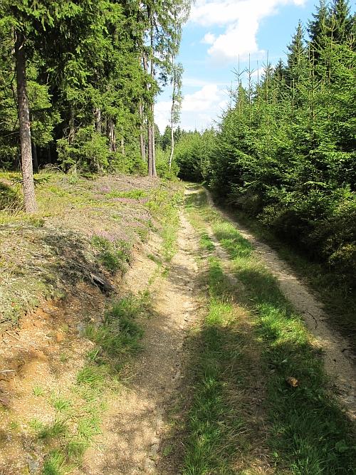 Umstrittener Waldweg, geplante Forststraßentrasse
