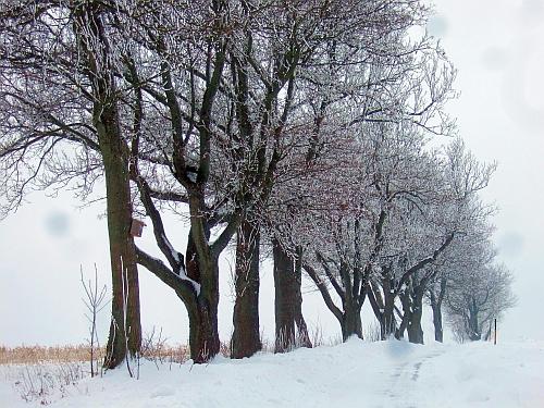Neuwirtshauser Weg , Foto Peter Staniczek