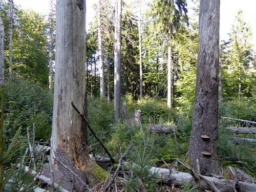 naturreservat_stueckstein_eslarn_totholz