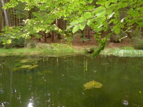 naturreservat_stueckstein_eslarn_waldsee